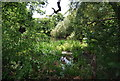 TQ5784 : Boggy pond by Ockendon Rd by N Chadwick