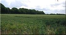 TQ5885 : Wheat field by N Chadwick