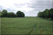 TQ5885 : Wheat south of Ockendon Rd by N Chadwick