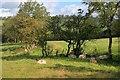 NY4425 : Hedgerow near Greaves by Mick Garratt