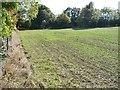 SE2607 : Eastern edge of greening field by Christine Johnstone