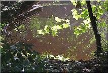 SE7485 : A splash in the river by Pauline E