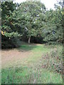 TL4101 : Path through Forest near Temple Hill by Roger Jones