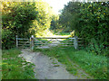 ST8222 : Entering Duncliffe Wood by Jonathan Kington