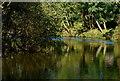 SH5945 : Afon Glaslyn, Gwynedd by Peter Trimming