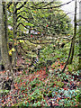 SD7517 : Woodland Near Quarlton Brook by David Dixon