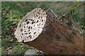 NY3705 : Money tree, Rough Sides by Ian Taylor