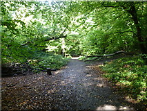TQ3472 : Trackbed of the old railway through Sydenham Hill Woods by Marathon