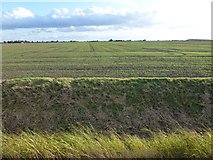 TF3009 : Winter cereal just starting to grow on North Fen by Richard Humphrey