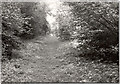 TL1979 : Fixed point 12 (1974), Monk's Wood NNR by D.O. Elias