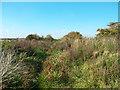 SU4984 : Overgrown Railway Track by Des Blenkinsopp