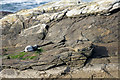 HP5607 : Common Seal (Phoca vitulina) on a rock off Spoo Ness, Westing by Mike Pennington
