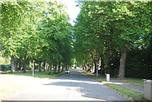SP0683 : Pebble Mill Rd by N Chadwick