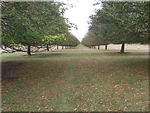 SP4317 : Avenue to SW of drive from Ditchley Gate by Liz Stone