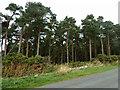NZ6817 : Merrys Wood by Robin Webster
