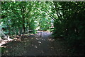SP0682 : Path through Cannon Hill Park by N Chadwick