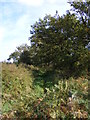 TM2540 : Footpath to Kirton Road by Adrian Cable