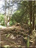 SP4802 : Jarn Mound wild garden by andrew auger
