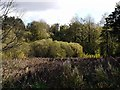 NZ3428 : Fen Carr, Hardwick Hall Country Park by Andrew Curtis