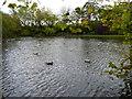 O1533 : City centre pond by James Allan