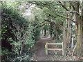 TQ3963 : Path in Rushfield Shaw by David Anstiss