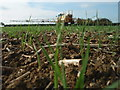 TL1184 : Winter wheat plants at ground level by Michael Trolove