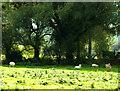 SU0725 : Sheep in the shade by Jonathan Kington