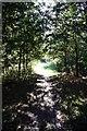 SK3239 : Path through the trees at Kedleston Hall by Graham Hogg