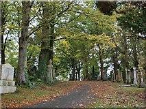 NS5859 : Scene in Cathcart Cemetery by Alec MacKinnon