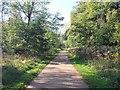 ST8389 : Waste Drive, Westonbirt Arboretum by David P Howard