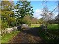 NX4368 : Mattie White's Bridge by Andy Farrington