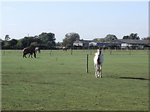 SP2504 : Fields with horses at Asthall Farm by andrew auger