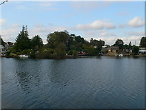 TQ1169 : The eastern tip of Sunbury Court Island by Eirian Evans