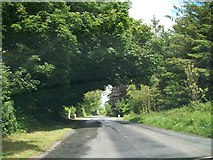 N5976 : The tree-lined Newtown to Balrath Road by Eric Jones