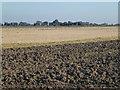 TF3305 : Farmland on Inkerson Fen north of Thorney Toll by Richard Humphrey