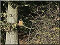SK6431 : Bird box by Alan Murray-Rust