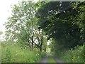 N5777 : Bohreen leading towards Sliabh na Caillí by Eric Jones