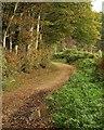 SY1191 : East Devon Way by Derek Harper