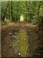 SY1192 : East Devon Way approaching White Cross by Derek Harper