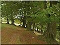 SY1292 : Trees by the East Devon Way by Derek Harper