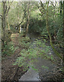 SS8383 : The Afon Cynffig in woodland just north of Kenfig Hill by eswales