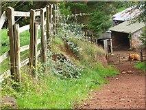 SX8659 : Orange Way in Devon and Torbay (37) by Shazz