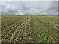 TL2663 : Large stubble field by Hugh Venables