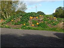SX8465 : Orange Way in Devon and Torbay (80) by Shazz