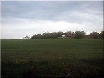 NZ5315 : Farmland near Gypsy Lane by JThomas