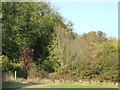 TQ3557 : Path through the trees, Woldingham by Malc McDonald