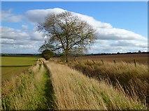 NZ2308 : Farmland, Barton by Andrew Smith