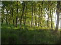SX7888 : Cod Wood by Derek Harper