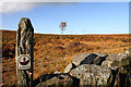 NU0131 : Doddington Moor by Walter Baxter