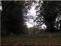 TQ7668 : Field of fire, Brompton Road by David Anstiss